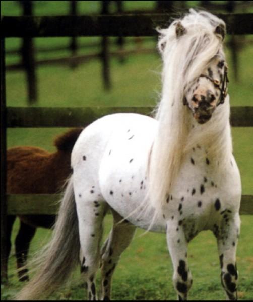 Quel cheval préfères-tu ?
