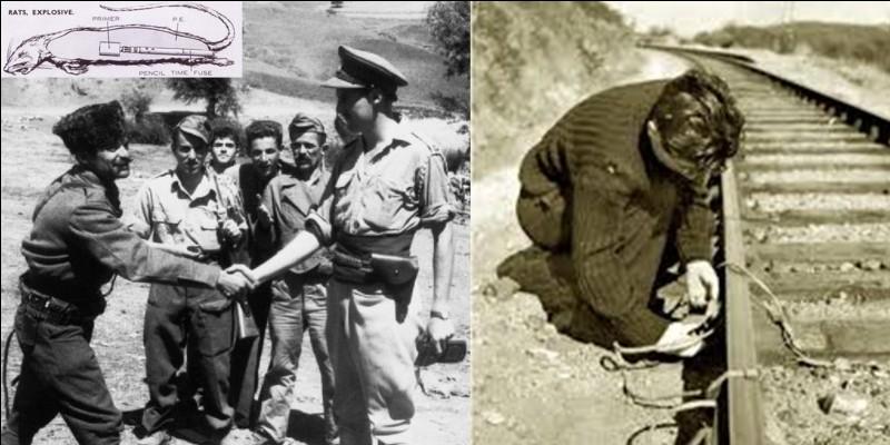 Suivant Churchill, le SOE (Special Operations Executive) devait « mettre le feu à l'Europe » (And now, set Europe ablaze !). Pour cela, cet organisme créa des armes assez « spéciales » ! Parfois, ce furent des échecs. Ce ne fut pas la seule action du SOE.Quelle arme assez « spéciale » fut créée par le SOE ?