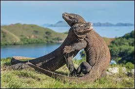 Le dragon de Komodo en est un.