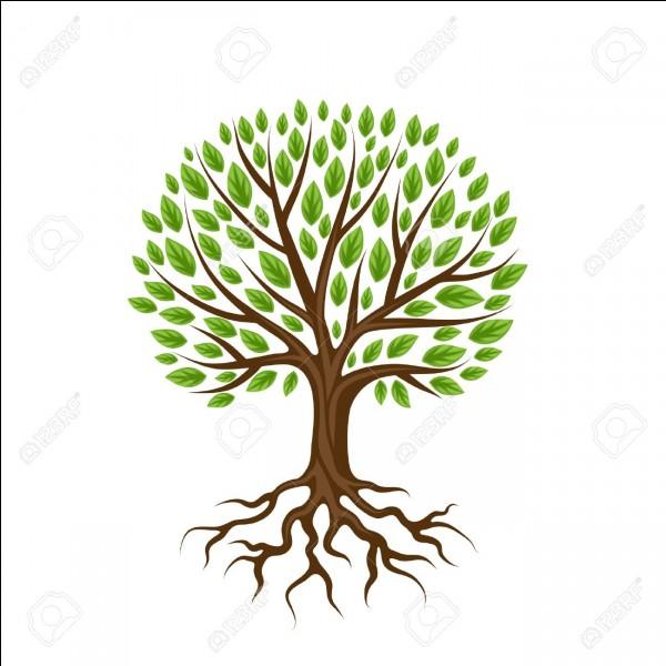 Les racines sont...