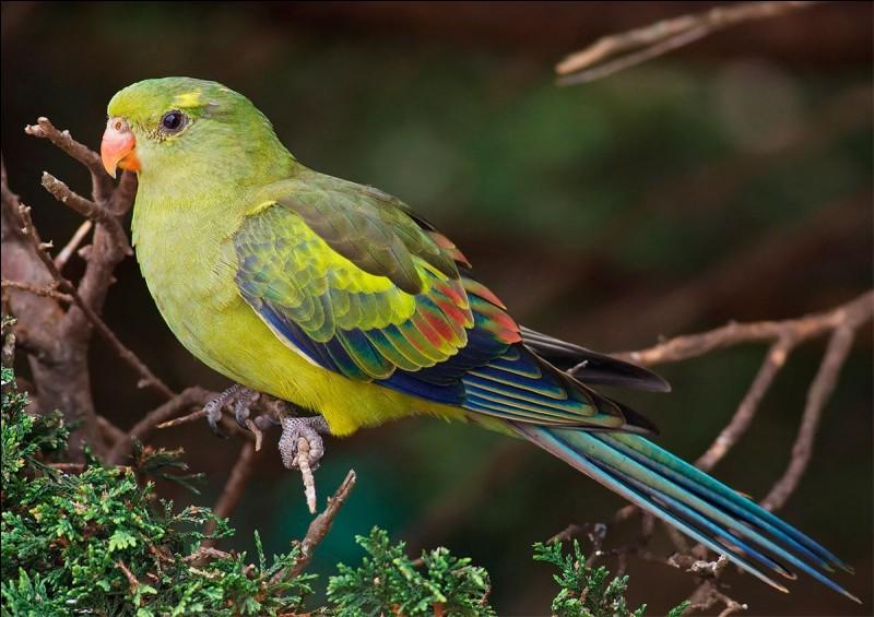 Comment s'appelle l'oiseau ?