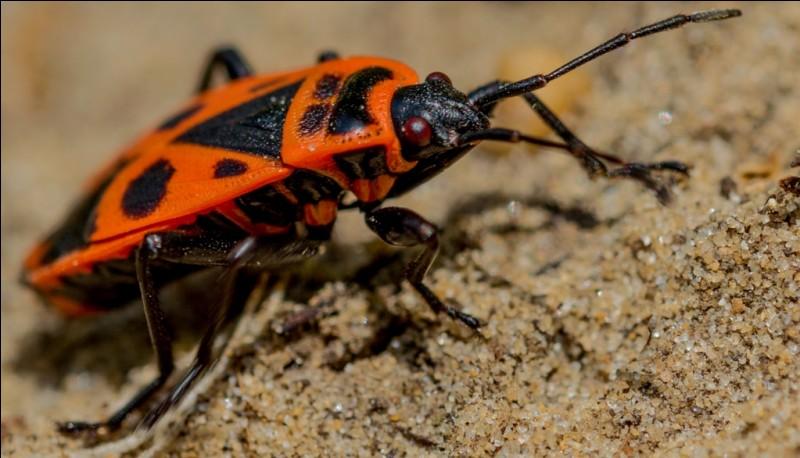 Quelle proposition n'est pas un insecte ?