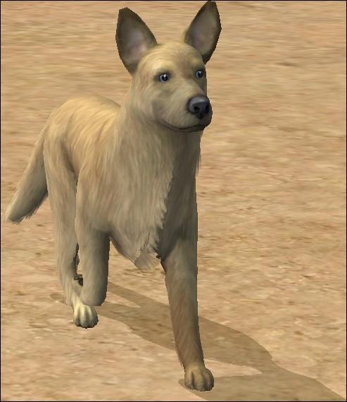 """Longue vie aux variabilis, ce qui signifie """"chien unique"""", et qui ne doivent jamais appartenir..."""