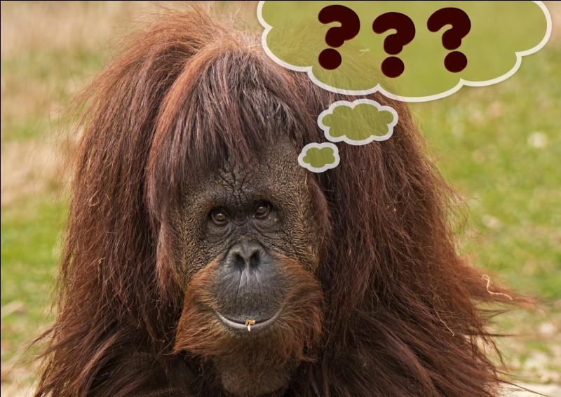 Quel animal peut être une bête de somme ?
