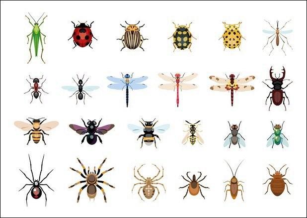 Quel insecte a pour surnom la bête à bon Dieu ?