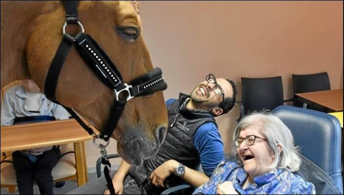 Comment s'appelle le cheval qui s'introduit dans les hôpitaux afin de guérir les gens ?