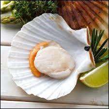 Un pétoncle se trouve dans quelle classe de mollusques ?