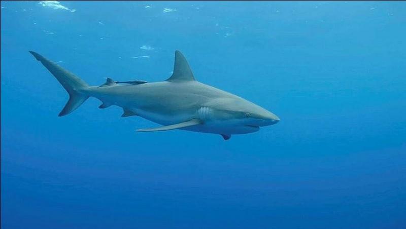 Les requins ont-ils des os ?
