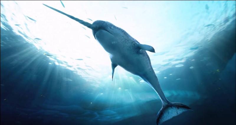 Quel animal est aussi connu sous le nom de licorne de mer en raison de sa défense pouvant atteindre les 3 mètres ?