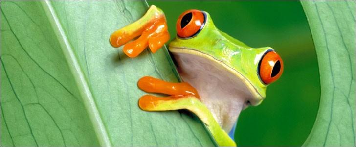 Comment est décrite la grenouille dans la bible ?