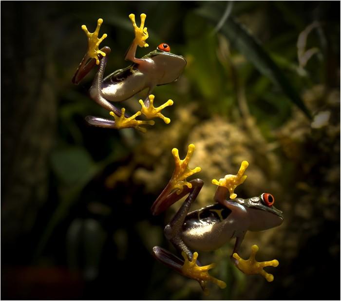 Il pleut, il mouille, c'est la fête à la grenouille !