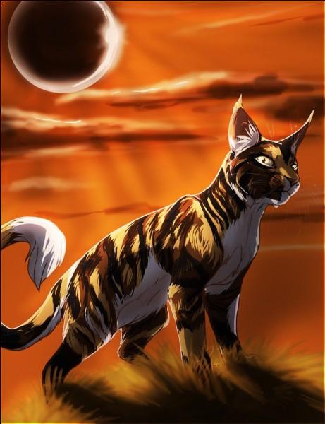 Comment s'appelait Sol quand il était un chat domestique ?