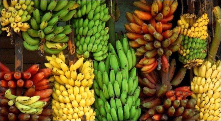 Laquelle n'est pas une variété de bananes ?