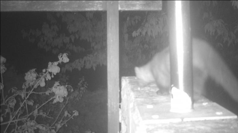 La plupart du temps, on ne s'aperçoit même pas de sa présence, pourtant elle vit à nos côtés, souvent dans notre grenier !