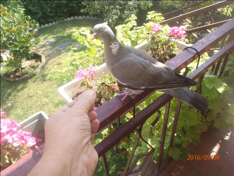 Identifiez cet oiseau !