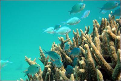 Quelle est la plus grande profondeur marine (la fosse des Mariannes) ?