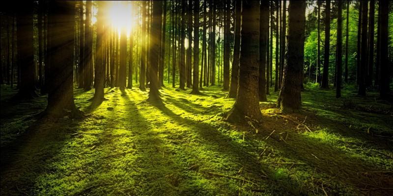 Qui est la divinité de la nature ?