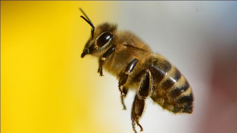 Quelle est la principale cause du déclin des abeilles ?