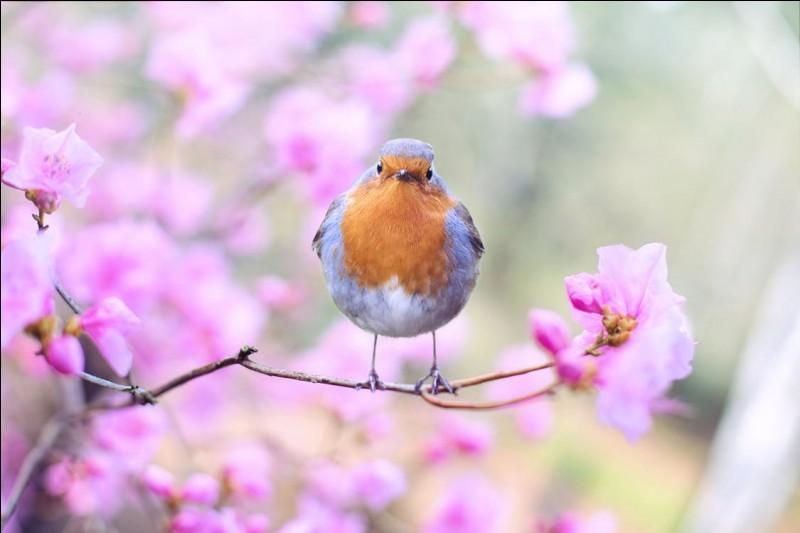 À combien est estimé le nombre d'espèces d'oiseaux ?