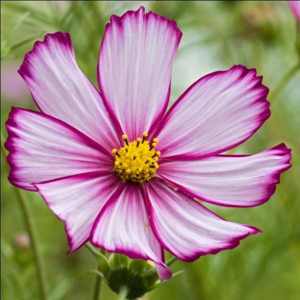 Comment appelle-t-on l'organe reproducteur femelle de la fleur ?