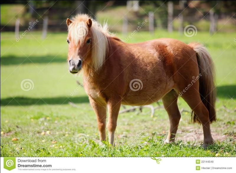Quel est ce poney ?