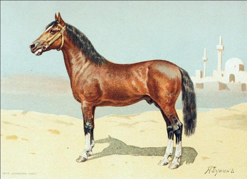 Quelle est la robe de ce cheval ?