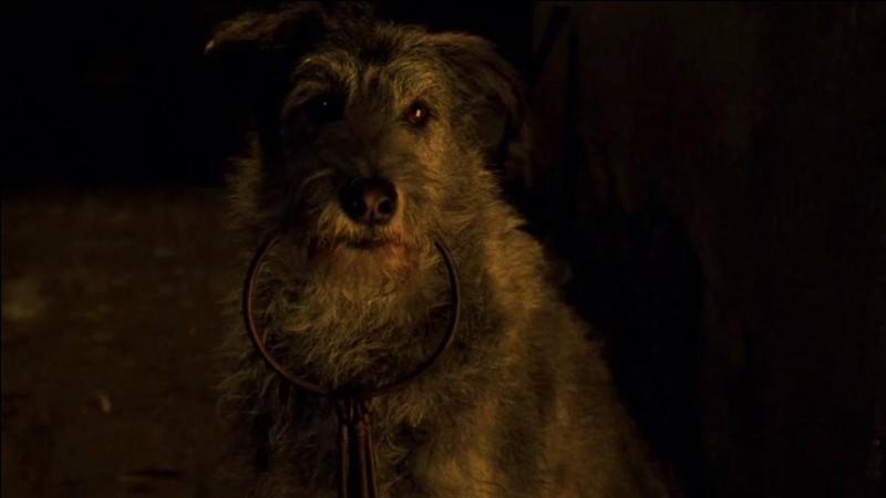 A quelle attraction ce chien vous fait-il penser ?