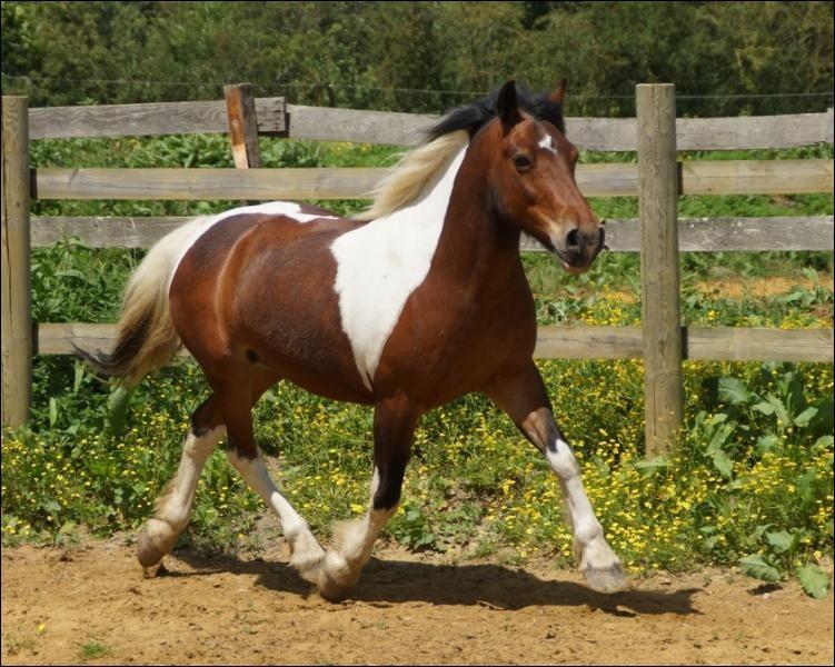 Quel est le régime alimentaire du cheval ?