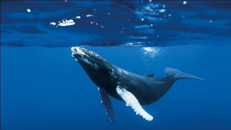 On dit que la baleine...
