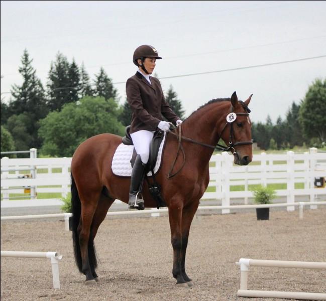 Comment appelle-t-on le sport où l'on fait du cheval ?