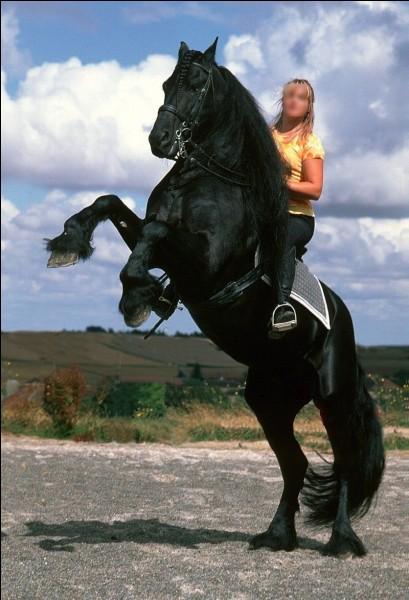 Comment appelle- ton la personne qui monte à cheval ?