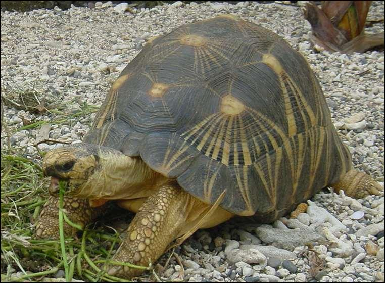 Comment dit-on tortue en japonais ?