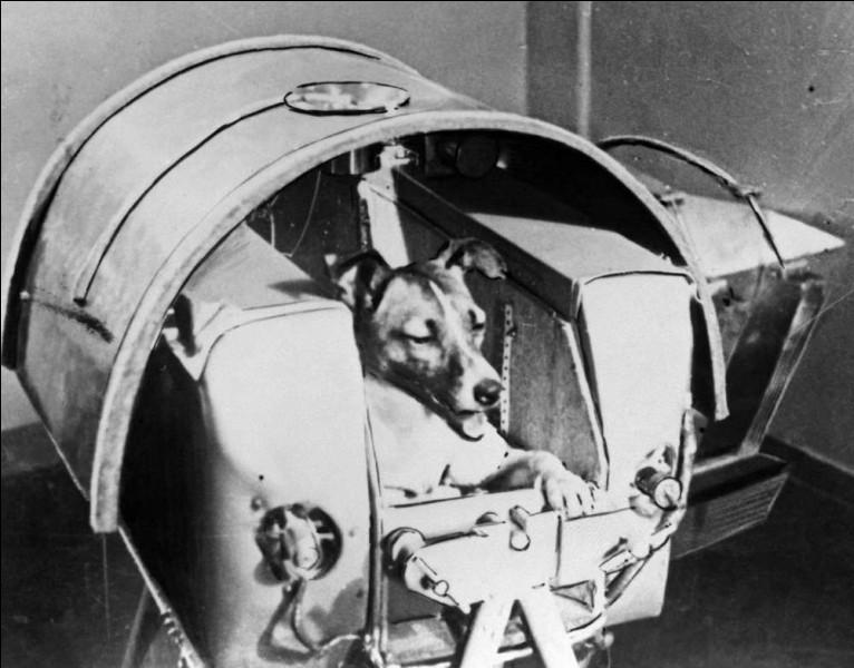 Le 3/11/57, elle est devenue le 1er être vivant à aller dans l'Espace, à bord de Spoutnik 2, 1 mois à peine après Spoutnik 1 : déjà Khrouchtchev est en course avec les Américains. Dés le départ, il était connu qu'ils ne pourraient la récupérer. Cette chienne était extrêmement calme et d'une grande docilité, entraînée au confinement et à la centrifugeuse : sacrifiée inutilement. Quel est son nom ?