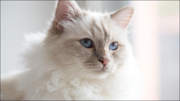 Comment les chats regardent-ils le monde?