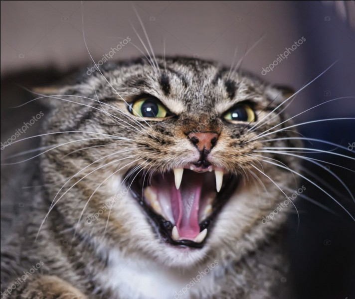 Quel est le chat le plus sauvage ?
