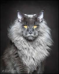 Quel est le chat le plus rare ?