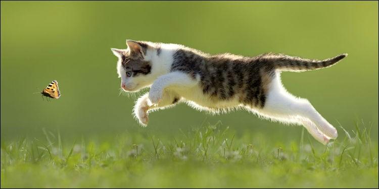 Y a-t-il des chats plus rapides que les humains ?