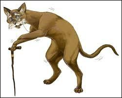 Quel est l'âge maximal des chats ?
