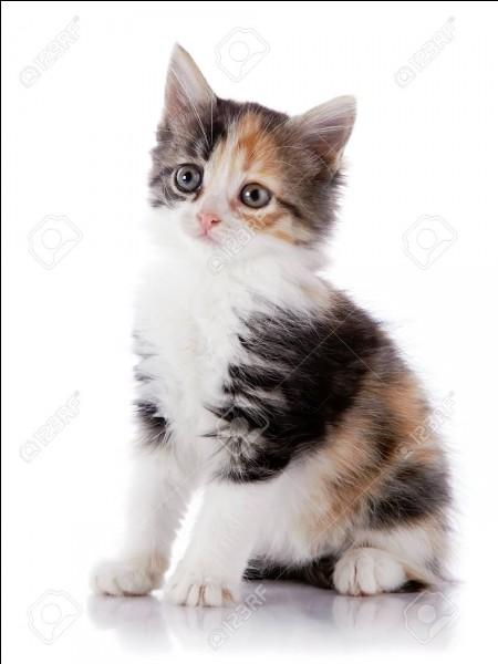 À quel âge pour les chats correspondent 2 ans chez les humains ?
