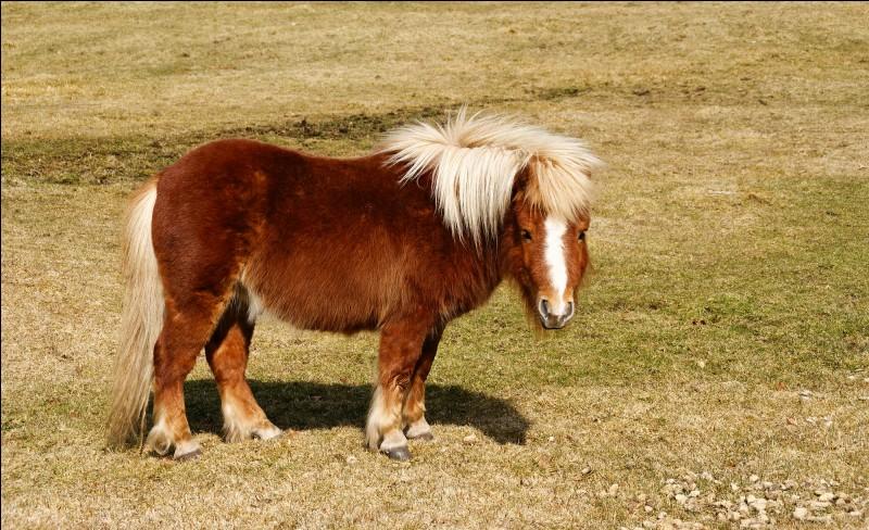 Comment se nomme la race de ce cheval ?