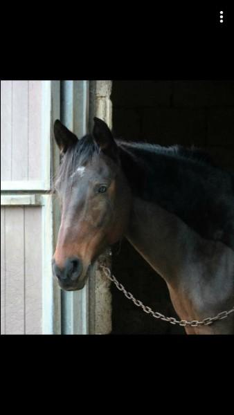 Comment s'appelle le cou du cheval ?