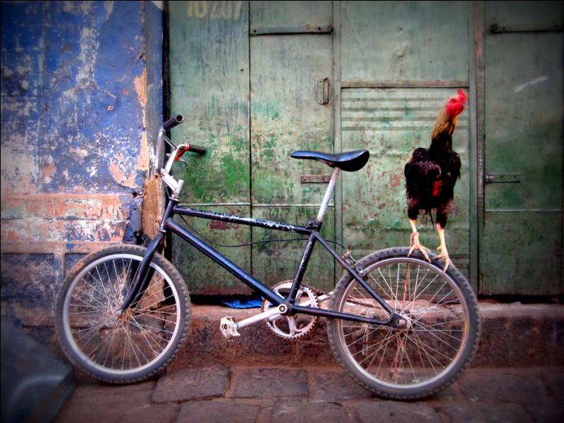 Quelle est l'expression qui désigne la bicyclette ?