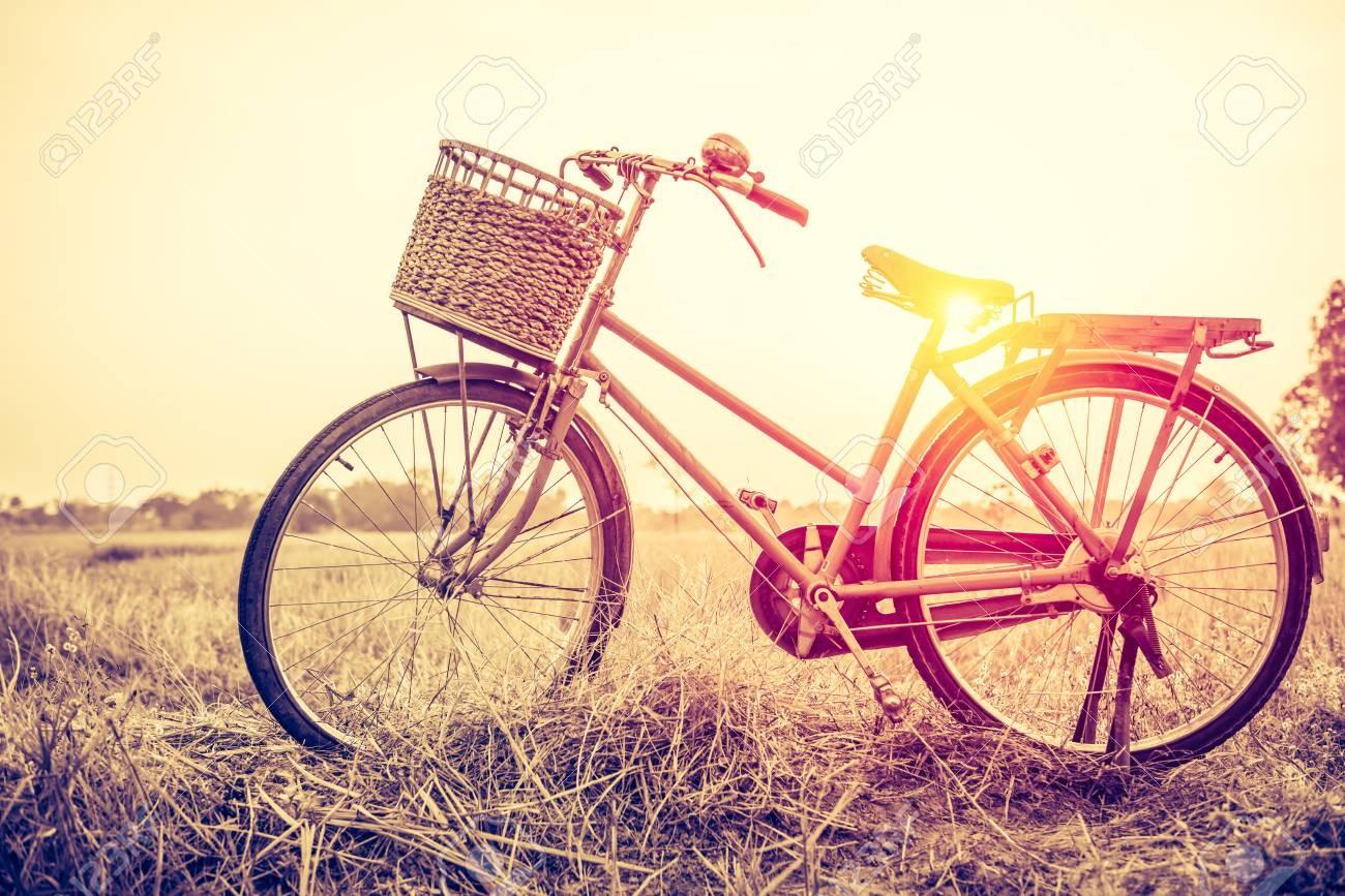 Journée mondiale pour le vélo !