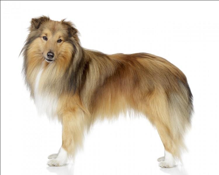 Comment se nomme ce chien ?