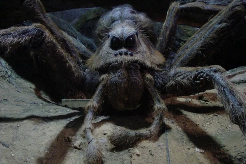 Quel animal n'est pas une araignée ?