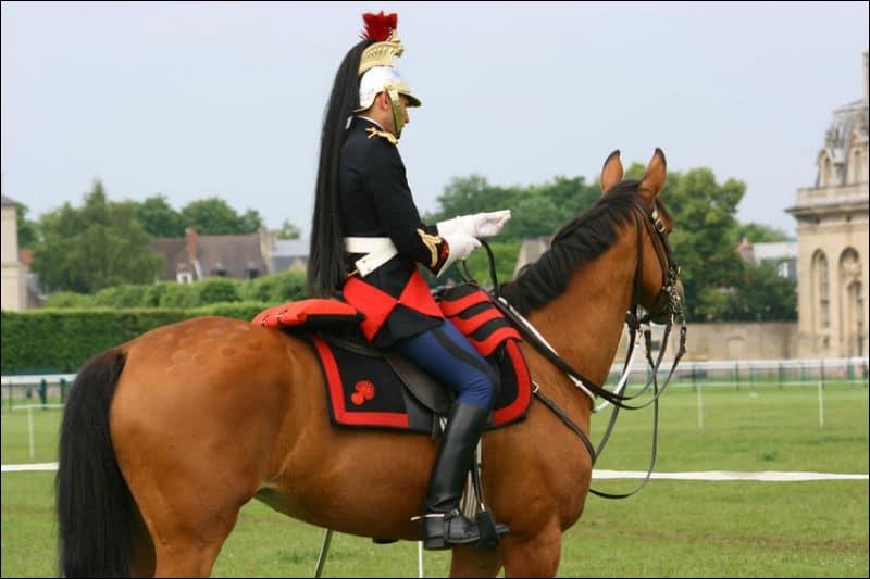 Selon vous, un cavalier se doit d'être...