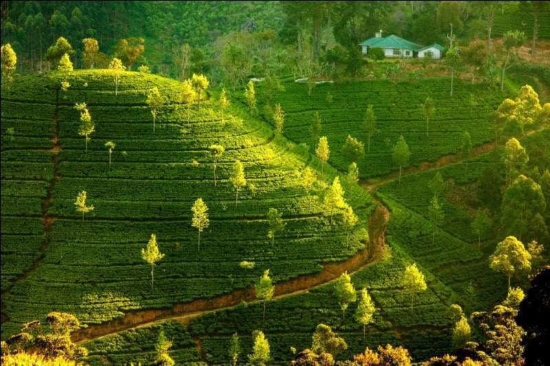 Nichée au sommet de ces plantations de thé, cette maison semble inatteignable . Les thés de Ceylan sont produits dans ces régions montagneuses du sud de l'île : la classification se fait en fonction de l'altitude à laquelle le thé a poussé. Celui de la maison doit être de qualité.Nommez l'état insulaire où est située cette maison, un pays dont le thé est réputé dans le monde entier ?
