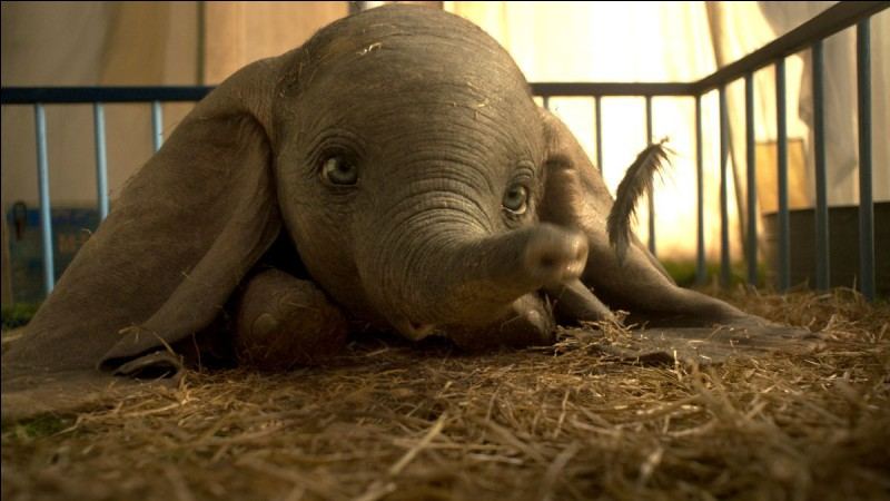 Dans le grand classique de Disney, quel objet enchanté permet à Dumbo de voler après l'avoir tenu avec sa trompe ?