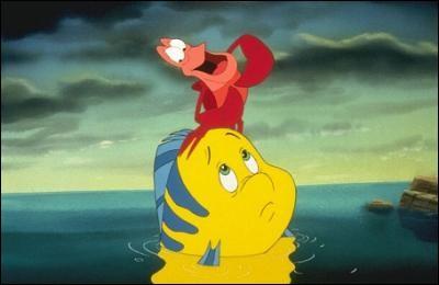 Qui sont les amis d'Ariel ?