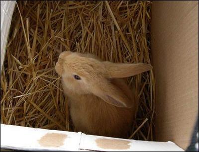 Pour le transport en voiture, que doit-on utiliser pour éviter trop de stress au lapin ?